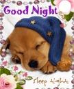 Goodnight Puppy