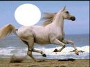mar cavalo 1 foto