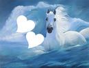 cheval dans l'eau