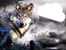 le loup  dans le nuage