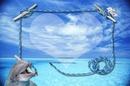 mer et dauphin
