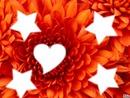 Fleur de l'Amour