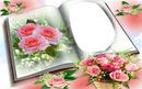 Cadre aux roses