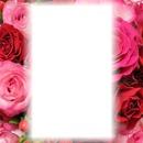 Roses profil 2