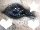 yeux d'ane