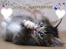 Joyeux anniversaire chaton ❤❤