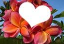 Fleur Tipanié