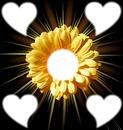 Fleur Jaune coeur fleurs