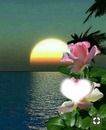 rosa para mi madre