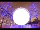 noche lila