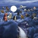 paraiso de perros