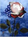 patriodic rose
