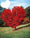 arbre en coeur