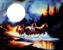 cheval nuit