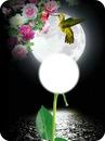 moon birdie