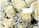 Cc blancas rosas