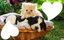 *chaton & toutou*