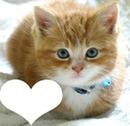 chaton brun 1 photo