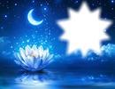 Fleur de lotus-nuit-lune-étoiles