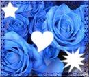 rose bleu 3