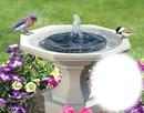 Bain d'oiseaux - fontaine