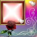 rosa para un amor