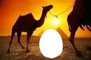coucher de soleil egyptien