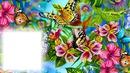 Pillangó virágok