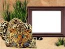 animal, leopard