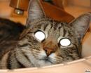 un chat dans les yeux
