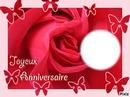 anniv rose