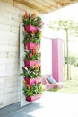 terrasse fleuris