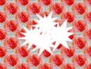 roses*