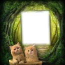 Famille chaton