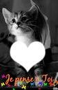 *chatons*