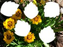 beauté des fleurs