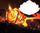 rose en feu