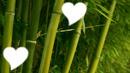 le coeur bambou
