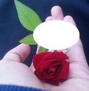 mi hermoza rosa