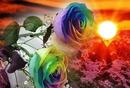 fantastique roses