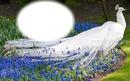 Oiseau-paon blanc-fleurs bleues