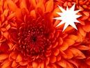 gros plan d'un fleur
