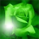 ROSA GREEN