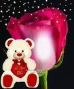 Cc rosa con peluche
