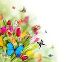 des tulipes avec des papillons 1 photo