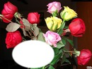 Quelques Roses*
