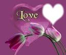 LOVE & TULIPS