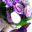 Cc entre rosas y mariposas