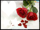 les rose o coeur etoilé