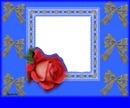 modrý s ružou